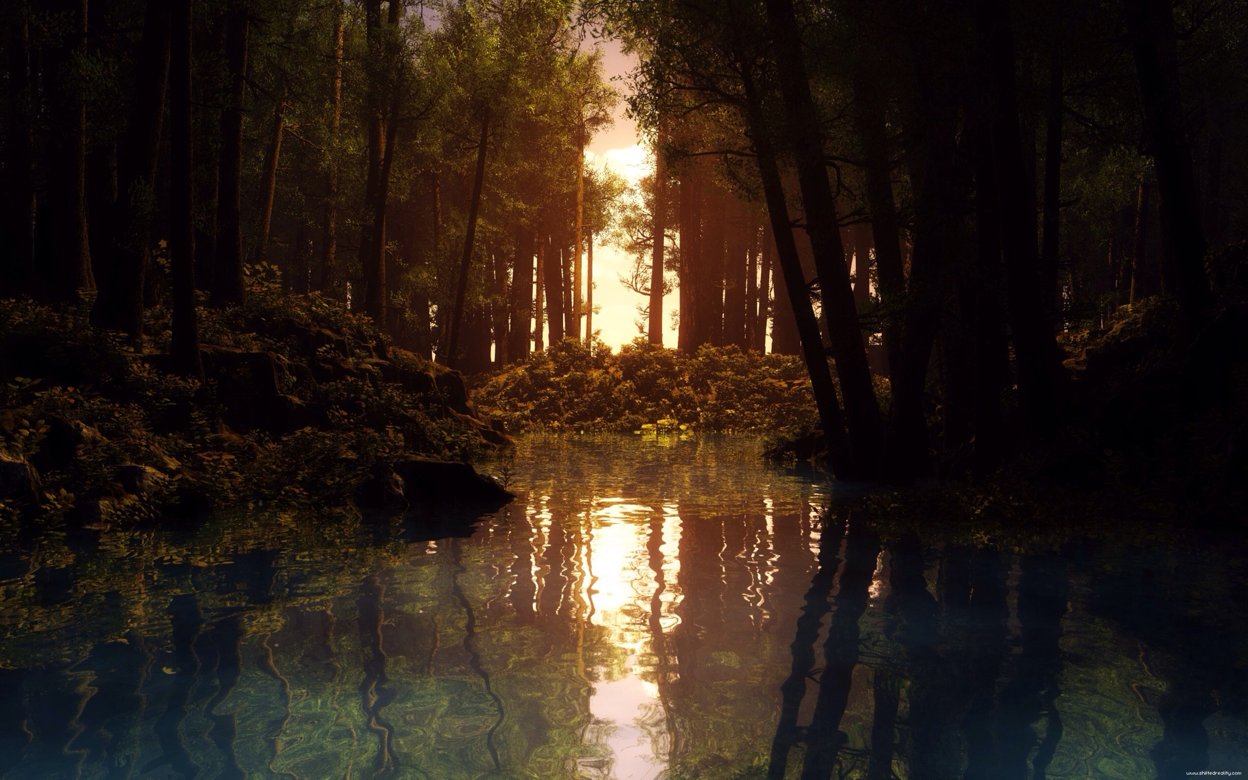 forest water lake Nature Sunlight Shore Trees Wallpaper