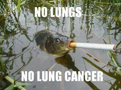 fish Fisch Zigarette cigar  Lungenkrebs lung cancer