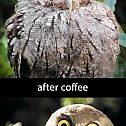 2013/11/coffee-owl-before-and-after-844582